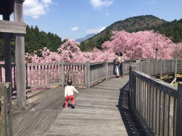 桜のきれいな4月でした