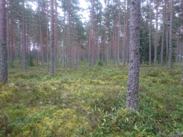 きれいな森