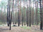 20070819_woods