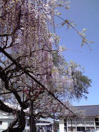 20090426_fuji