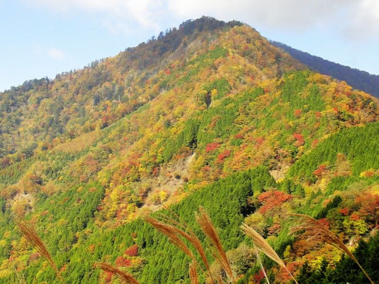 20121120_koyo_soba